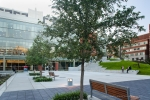 Seattle - Seattle University student plaza for The Berger Partnership Landscape Architects